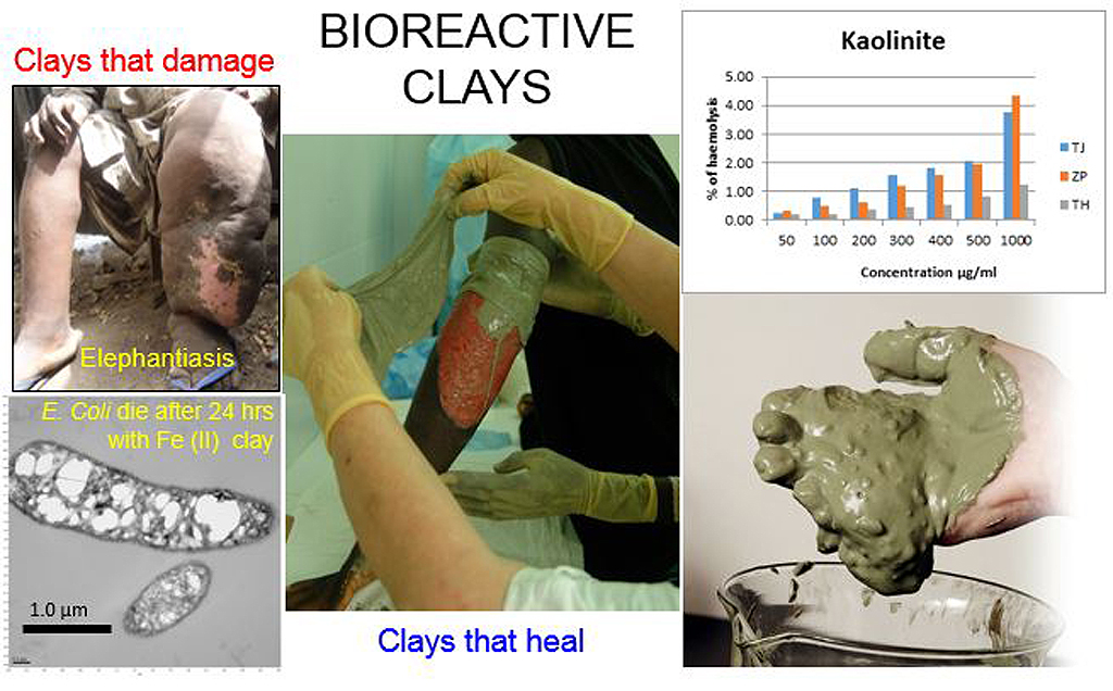 Bioreactive clay minerals: impacts on environmental and human health